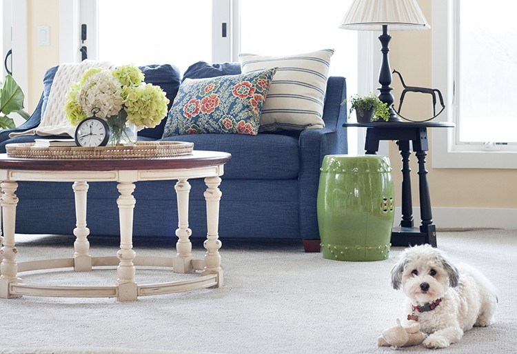 PetProof Carpet, Kelly Rinzema