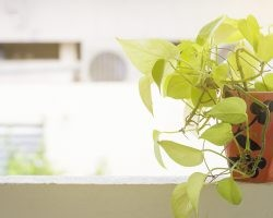 How to Find Low-Maintenance Plants | Direct Energy Blog