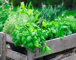 7 Herbs and Veggies to Plant in Your Spring Garden | Direct Energy Blog