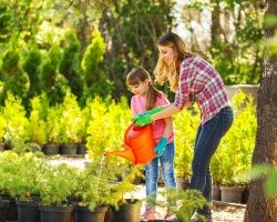 When and How Often to Water Your Plants | Direct Energy Blog