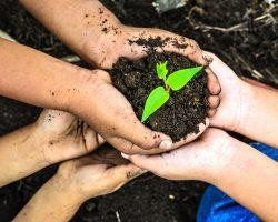 Ideas to Celebrate Earth Day | Direct Energy Blog