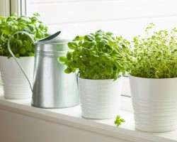How to Grow Herbs Indoors | Direct Energy Blog