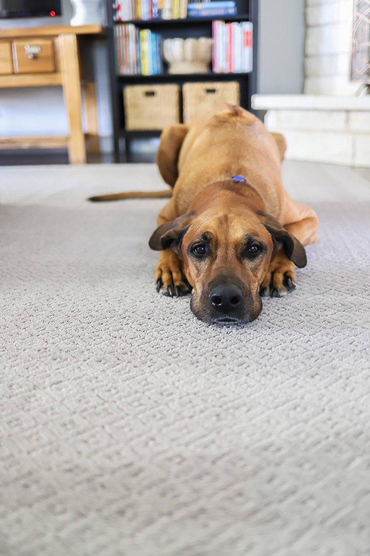 Finding the perfect carpet may seem overwhelming, but oftentimes, the right carpet can help complete the design aesthetic of your room. The Home Depot's pet
