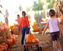 Family Friendly Festivals Around the Country | Direct Energy Blog